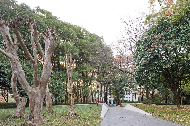 武汉大学夏坚白纪念园